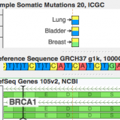 Somatic Mutation BRCA1