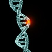 Revisiting the Five Splice Site Algorithms used in Clinical Genetics